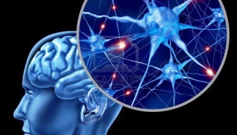 Cerebro humano. Foto D1: cortesía.