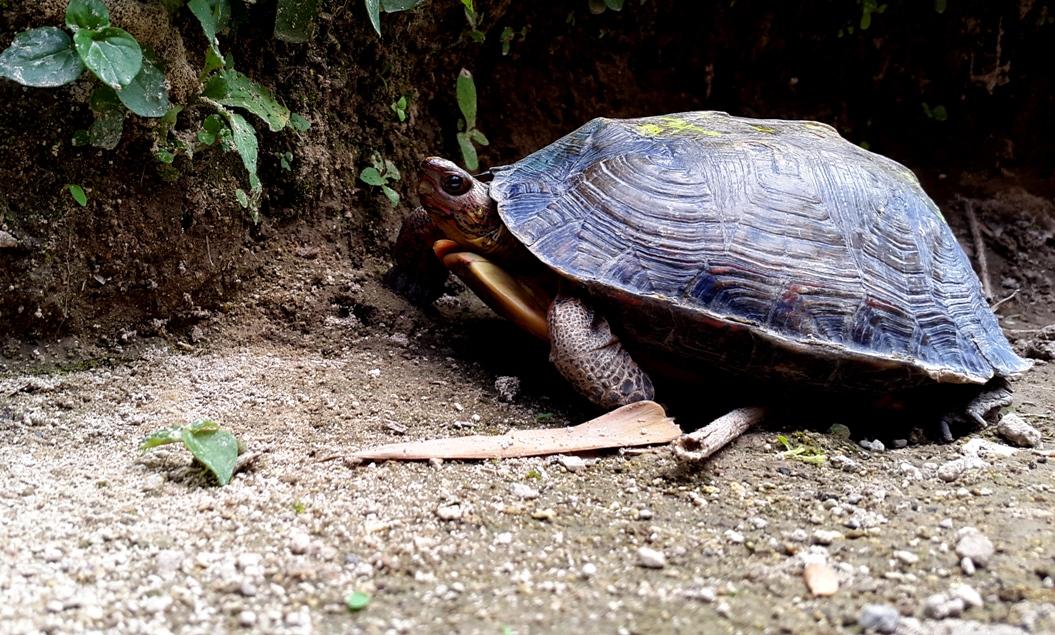 En la casa de David todavía está su tortuga. El la bañaba todas las mañanas. Foto D1/ Salvador Sagastizado.