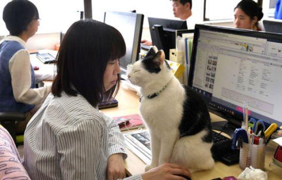 gatos empresas Japón