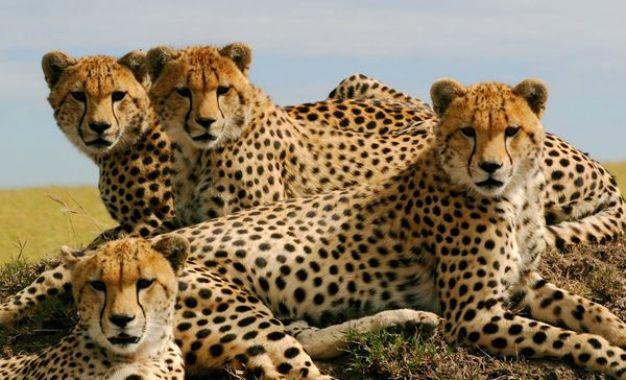 Foto de Sunrise Africa