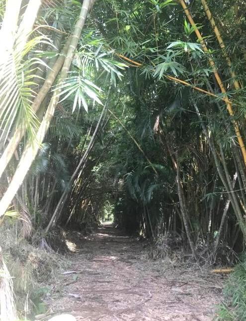 La vereda de la Tzun-tecumat (Calavera o Punta del Tecomate). El Milagro de Cuaita, Sonsonate. (Foto de IMEL).