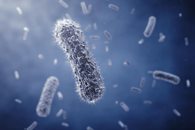 escherichia-coli_26705_l