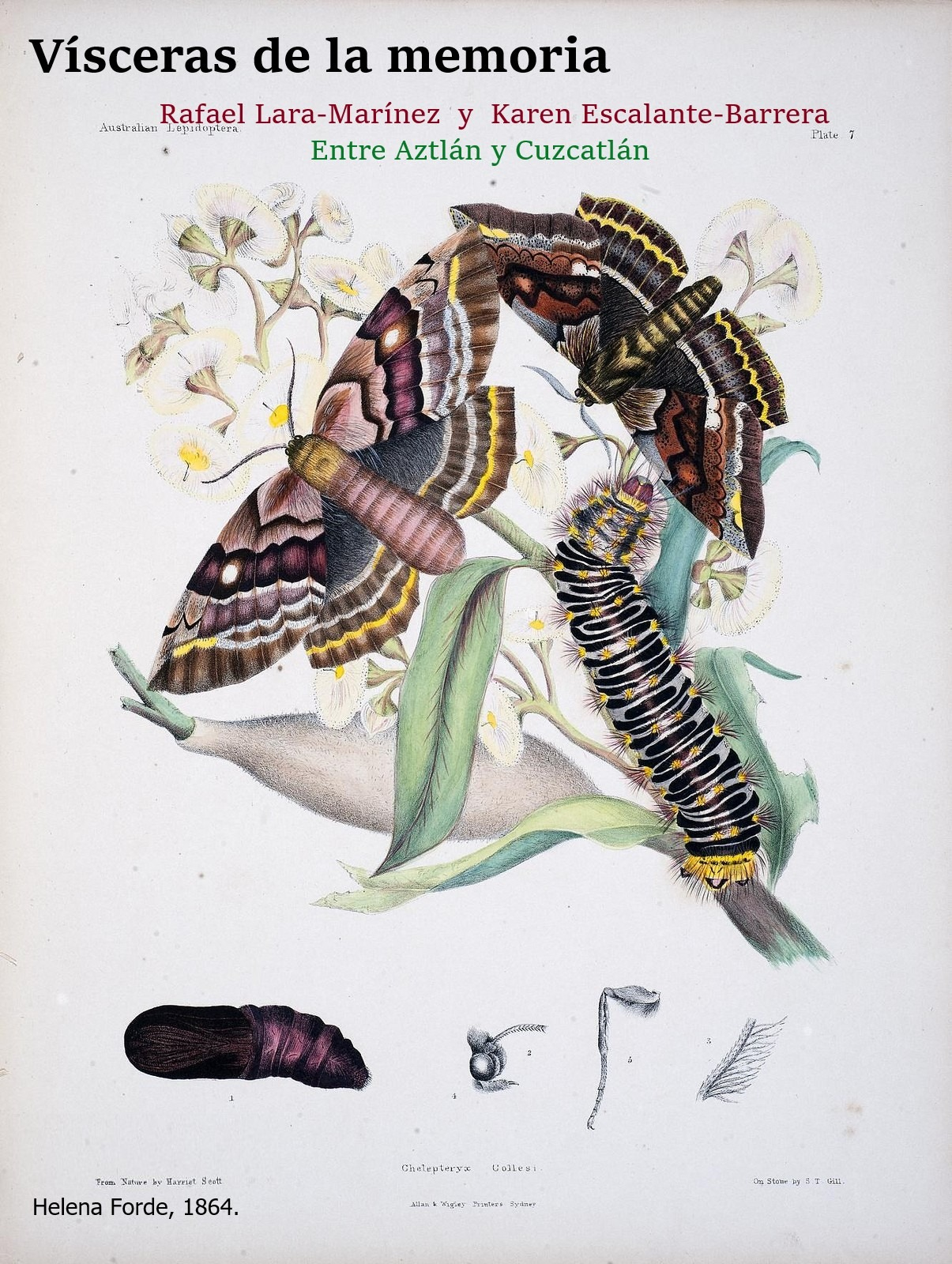 Mariposa mgsgghd