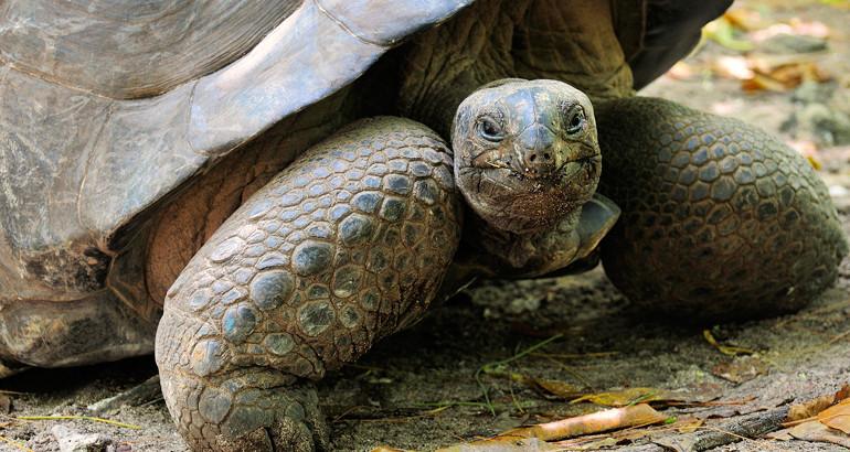 Bebé muere tras ingerir sangre de tortuga para 'protegerse' del COVID-19