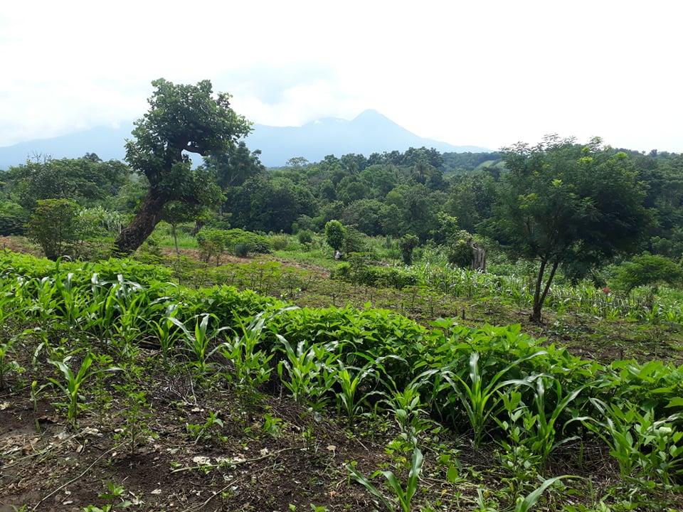 campos de tule hoy son de cilantro maiz u otros cultivos Foto Adriana Tadeo Pushtan Nahuizalcio