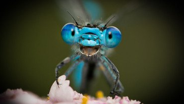 FOTO: NATIONAL GEOGRAPHIC/Comedy Wildlife Photography Awards 2021